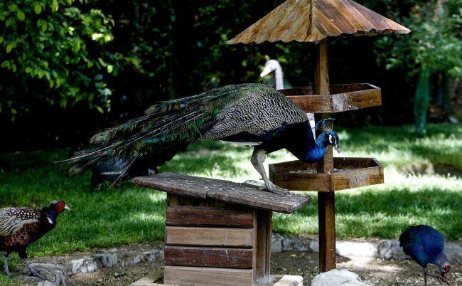 باغ پرندگان اصفهان