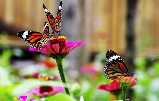 باغ پروانه های پوکت